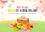 돌(Dole) 코리아가 봄 피크닉 시즌을 맞아 4월 11일부터 5월 10일까지 온라인 수입 과일 전문 쇼핑몰 돌리버리에서 피크닉 바나나 박스를 판매한다