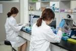 실험실에서 타겟 유전자를 검출하고 있다