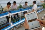 22일 세종창조경제혁신센터 출범 1주년 기념식을 앞두고 세종시 연동면 예양리에 설립된 두레농업타운에서 세종센터 관계자가 모바일 디바이스를 이용해 스파트팜을 운영하는 시스템에 대해 설명하고 있다