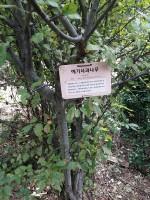 치유 텃밭 내 식물에 이름표와 U-Tag를 설치한 모습