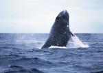 오키나와 고래 관광 투어