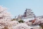 벚꽃이 만개한 오사카성 전경