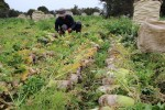CJ프레시웨이가 올해는 계약재배 면적을 대폭 늘려 농가와의 상생 드라이브를 가속화할 계획이다