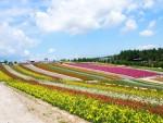 홋카이도 후라노 팜 도미타