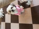 퍼피가드가 5일 강아지 미끄럼 방지 매트를 출시했다