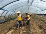 한국보건복지인력개발원장이 19일 충북청주시 오송읍 호계리에서 농가복구를 위한 봉사활동을 실시했다