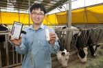 SK텔레콤과 유라이크코리아가 IoT 가축 관리 서비스를 개시했다