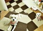 퍼피가드가 강아지 미끄럼 방지 패드 포토 구매평 이벤트를 실시한다