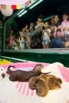 롯데월드 아쿠아리움이 6월 30일 롯데월드 아쿠아리움에서 태어난 귀여운 아기수달 5공주를 8월 10일 공개했다