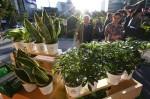 환경재단이 ING생명과 함께 미세먼지 해결을 위한 환경 사회공헌 활동으로 공기정화 식물을 무료로 나눠주는 오렌지플랜트 캠페인을 시작했다