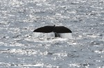 국립수산과학원 고래연구센터가 10월 27일 오전 10시경 포항시 구룡포 동방 10마일 해상에서 향고래 6마리를 발견했다고 밝혔다