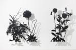 조진희 작가가 갤러리 그림손에서 21일부터 27일까지 전시회를 연다. 사진은 식물드로잉, 포멕스, 2018