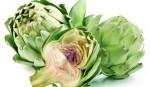 아미코스메틱의 아티초크잎 추출물을 유효성분으로 포함하는 튼살 예방 및 개선용 화장료 조성물