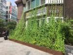 가든프로젝트가 2017년 성북구에 조성한 그린커튼사업