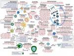 마이크로RNA 생식세포의 발생 및 분화에 따른 세포 특이적 역할에 대한 단면도