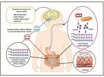 그림1. 음식물을 통한 오피오이드 펩타이드 섭취는 인체 건강에 잠재적인 위험요소이다