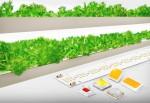 삼성전자의 식물 생장용 LED 패키지와 모듈