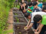 서울시립강동청소년수련관 청소년방과후아카데미 두빛나래가 운영하는 쑥쑥 건강먹거리 텃밭 활동으로 청소년들이 상추와 치커리 작물 심기를 하고 있다