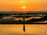 후쿠시마현 국제교류협회, 외국인 거주자 대상 사진 콘테스트 수상작 발표