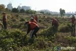 2012년 유해식물 제거활동