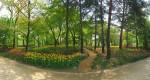 서울숲 튤립정원