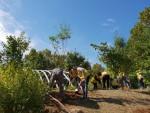 자원봉사자들이 서울숲 무지개언덕에 미세먼지 우수 수종인 갈참나무를 심고 있다