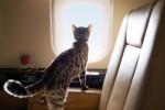 2년 동안 비스타젯 항공기에 탑승한 반려동물 수는 104% 증가했다