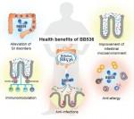 그림1. 인체 건강에 대한 비피도박테리움 롱검 BB536의 유익한 영향