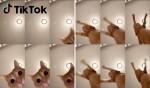 틱톡 반려동물 영상