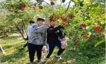 한국청소년대구연맹 사과따기 체험 활동
