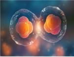 분화하는 세포 모습 예시