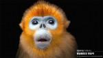 펜타클이 제작한 LG유플러스 '멸종동물 캠페인' 영상에 등장하는 황금들창코 원숭이는 서유기의 손오공 모델인 멸종위기종 동물이다