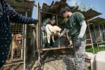 16번째 식용견 농장 폐쇄 및 구조 현장