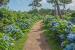 제주 허브동산이 수국 축제 기간을 맞아 6월 1일부터 진행했던 얼리버드 이벤트를 7월 31일까지 연장한다