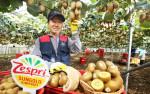 제주 서귀포시의 김태화 농가가 올해 수확한 제스프리 제주 골드키위를 선보이고 있다