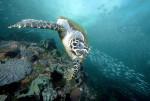 메리케이가 네이처 컨서번시와 협력 관계를 맺고 솔로몬 제도의 생태 관광에서 여성에게 권한을 부여해 멸종 위기에 처한 매부리 바다거북에게 필요한 지역 경제 기회와 보존 지원을 제공했다