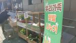 도시농업 홍보 실내식물 나눔 워킹스루 부스 운영