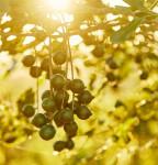 투명한 식품망을 기반으로 높은 소비자 신뢰도를 확보한 호주산 마카다미아