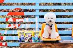 네슬레 퓨리나가 공개한 순살 베이컨으로 만든 강아지 간식 베긴 3종
