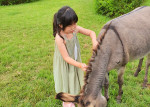 스카이밀크팜 농장 일과에 참여한 어린이가 당나귀와 교감 하고 있다