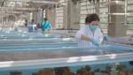 프로바이오틱스, 산호 회복 탄력성 높이고 폐사 방지