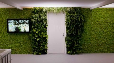 for Verde stabilizzato