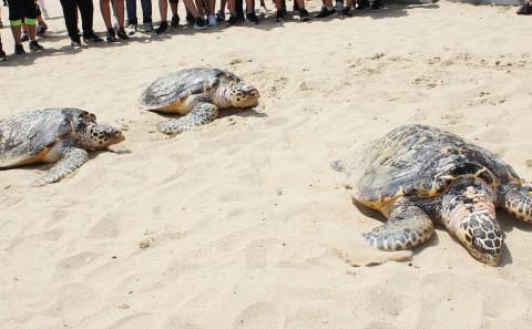 SEA LIFE 부산아쿠아리움이 세계 거북이의 날을 맞아 바다거북 일광욕을 진행한다