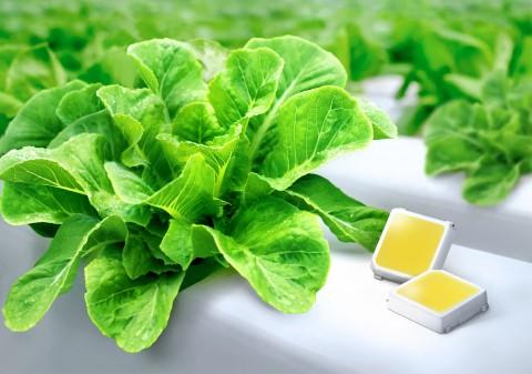 삼성전자가 식물 생장용 백색 LED 업계의 최고 효율을 달성했다
