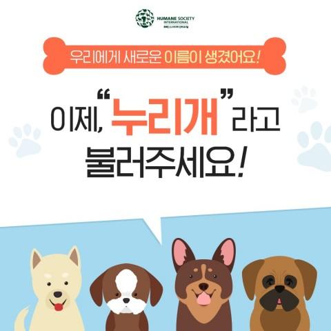 동물보호단체 휴메인 소사이어티 인터내셔널이 #NameMe, #나의 이름은 누리개 캠페인을 진행한다