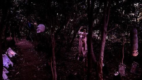 제주허브동산 귀신의 숲