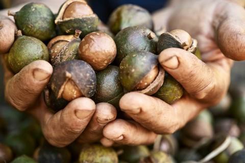 호주 마카다미아 협회가 지속가능한 생산을 위한 대응책을 제시했다