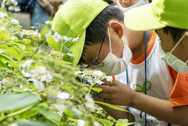 녹색교육센터가 2020 와숲 여름 활동을 진행하고 있다