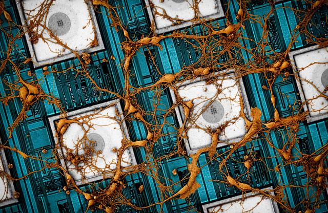 삼성전자가 뇌를 닮은 차세대 뉴로모픽 반도체에 대한 비전을 제시했다