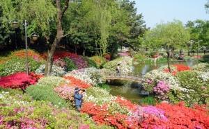 KRISS(한국표준과학연구원, 원장 강대임)가 영산홍, 철쭉 등 봄꽃들이 만개한 'KRISS의 봄'을 인근 주민들과 함께 하기 위해 5월 4일(금)부터 5월 6일(일)까지 3일간 '봄꽃축제'를 개최한다. (사진제공: 한국표준과학연구원)